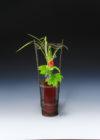 葉月の茶花